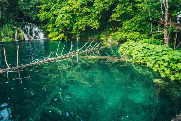 Màu nước xanh như ngọc thấy cả đáy ở Plitvice National Park, khu du lịch nổi tiếng ở Croatia thu hút rất nhiều khách du lịch từ Trung Quốc, Hàn Quốc.