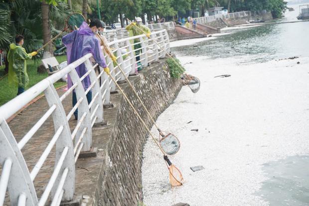 Sáng 9/7, hàng chục công nhân thuộc ban quản lý hồ Tây cùng nhiều thanh niên tình nguyện quận Tây Hồ, Hà Nội đứng dọc bờ hồ vớt hàng tấn cá chết nổi trắng sau một đêm.