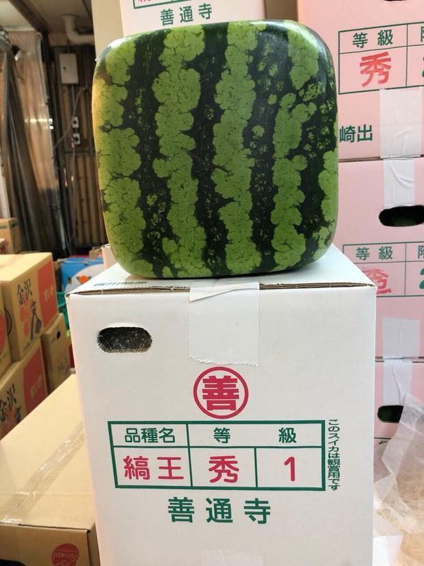 Loại dưa hấu vuông Nhật đang được bán ở Hà Nội với 4,5 triệu đồng/quả (ảnh: Khuc Ngoc Anh)