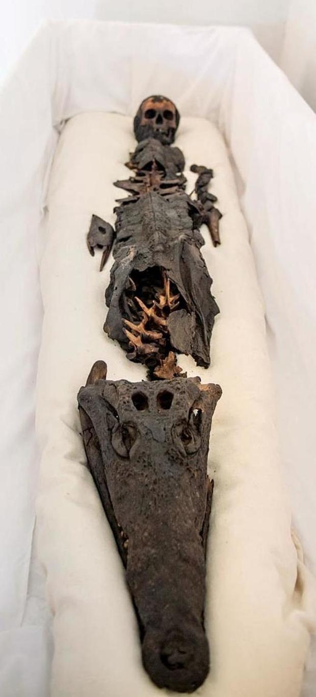 Lần đầu tiên, một xác ướp Ai Cập cổ đại với hai đầu, một đầu người và một đầu cá sấu, được chụp lại.
