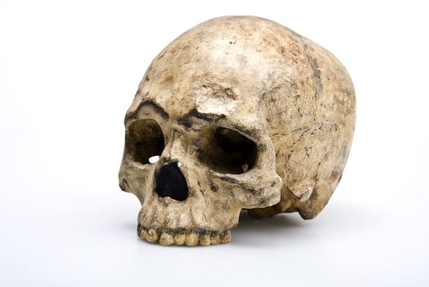 Nhưng nhóm xương mới có niên đại từ 8.000 năm trở lên.