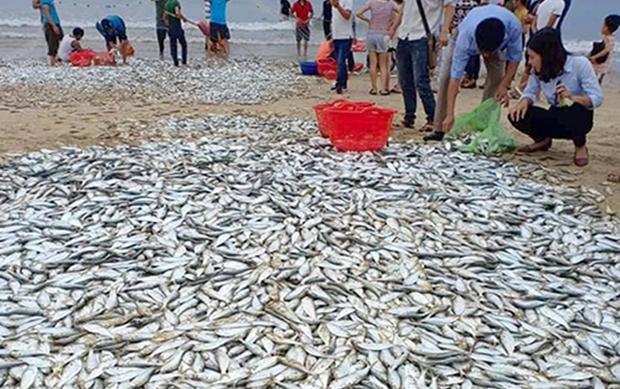 Cá mạuđược người dân hợp sức kéo lên bờ, nhảy tanh tách giữa bãi cát. Ảnh:Đ.H