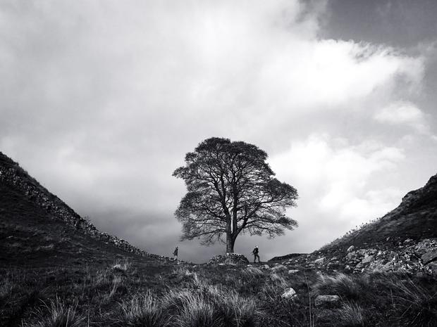 """Giải nhì Cảnh vật - """"At Sycamore Gap"""": Đó là một ngày âm u và tôi thích hình ảnh cây và những người đi bộ đứng trước đám mây như thế này. Chụp bằng iPhone 7. (Asuman Robson)."""