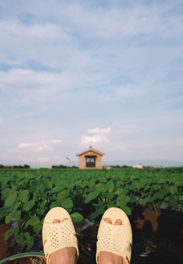 Ra thăm ruộng với ngôi đền nhỏ yêu thích của cậu bạn Lạc, tính ra tổ ong hợp với cảnh quan này ghê chứ nhỉ. Thánh tổ ong tái xuất với bộ ảnh mới tại miền Bắc nước Nhật xinh đẹp