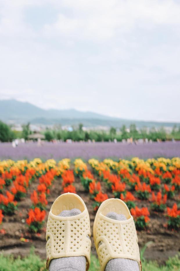 Và ngắm chút Lavender… Hành trình phương Bắc của dép tổ ong tạm kết thúc tại đây nhé. Thánh tổ ong tái xuất với bộ ảnh mới tại miền Bắc nước Nhật xinh đẹp