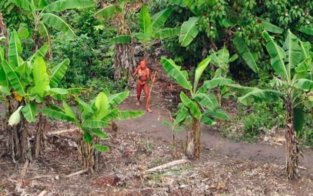 Các thổ dân sử dụng nhựa của cây maçaranduba để đốt cháy tạo ra ánh sáng để sinh hoạt buổi tối và săn lùng vào ban đêm. Ảnh: Odditycentral
