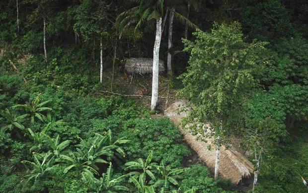 Những ngôi nhà thổ dân tự dựng phía sâu trong rừng Amazon. Ảnh: Odditycentral