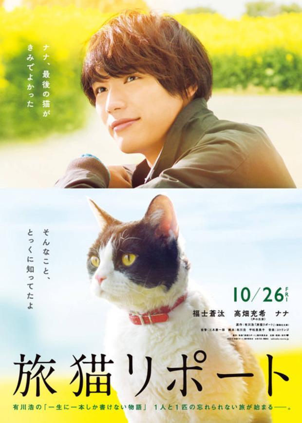 Tabineko Report  Bộ phim cảm động dành cho những người yêu mèo