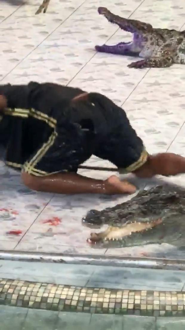 Người huấn luyện đã hét lên đau đớn trước khi giằng tay ra và phát hiện máu nhỏ giọt trên sàn. Ảnh: Viral Press