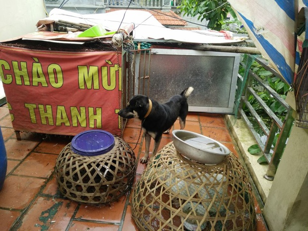Cảnh nhốt đàn gia súc, gia cầm, chó mèo tránh lũ.