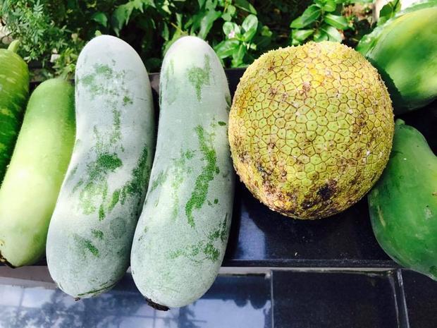 Khu vườn rộng được chăm sóc tốt nên thường xuyên cung cấp nhiều loại hoa quả, rau trái. Cô thường xuyên khoe những loại rau quả thu hoạch từ khu vườn của mình.