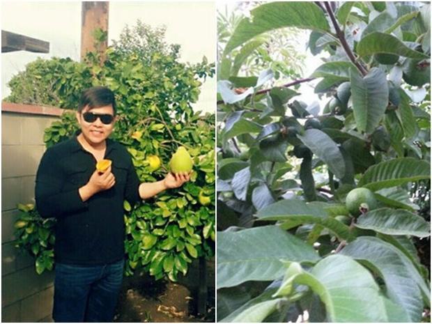 Người ta chỉ biết Quang Lê là nam ca sĩ nổi tiếng, có chuyện tình yêu khá ồn ào với hot girl Thanh Bi mà ít ai biết rằng nam ca sĩ còn là một nhà làm vườn mát tay khi sở hữu khu vườn sai trĩu quả.