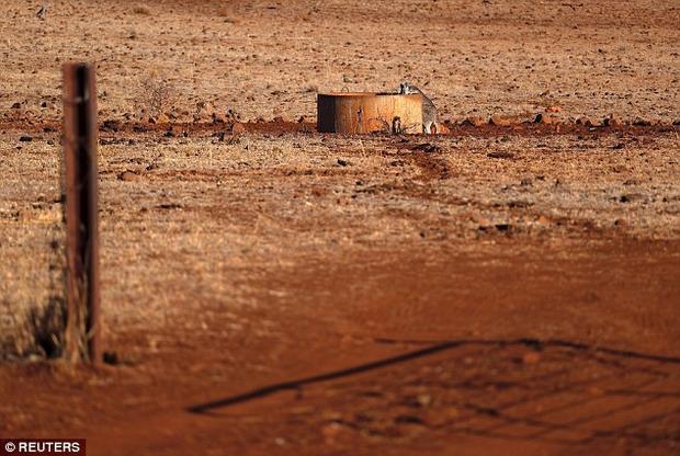 Một con kangaroo đang cố gắng uống nước từ một thùng chứa nước trong cánh đồng bị hạn hán nghiêm trọng.