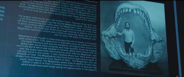 Lý giải khoa học: Cá mập siêu bạo chúa trong 'The Meg' có thể sống và hoành hành trong thời hiện đại?