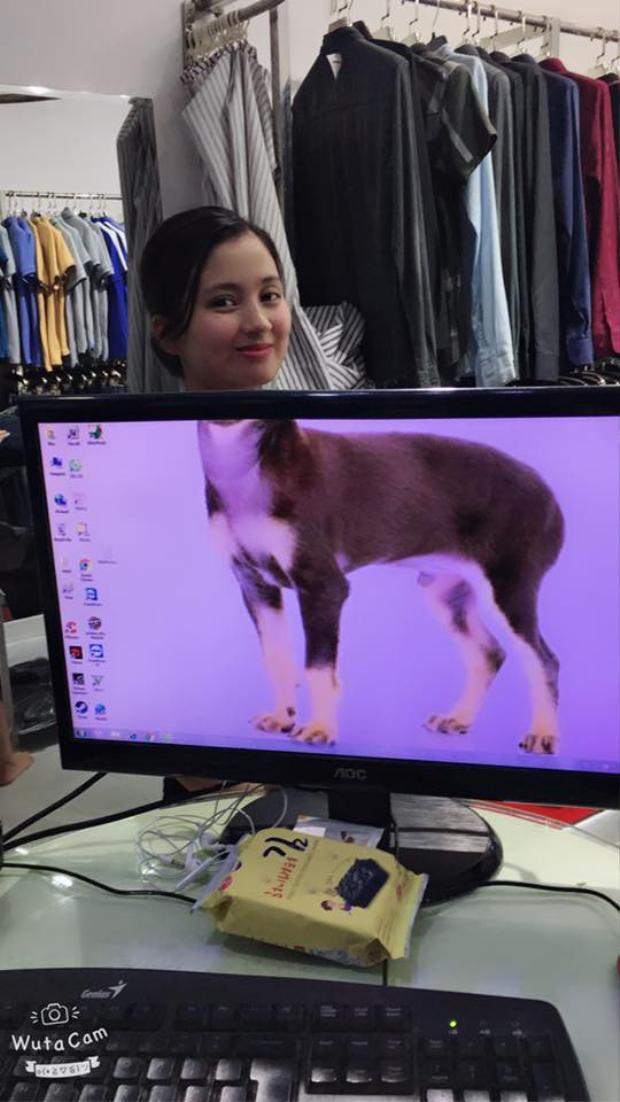 Bức ảnh của cô vợ xinh xăn bị ghép với thân chú cún khiến dân mạng bò ra cười.