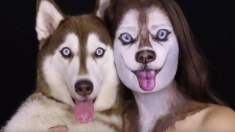 Nếu nhìn thoáng qua thì có lẽ nhiều người sẽ nhầm lẫn rằng có đến 2 chú Husky trong tấm hình này. (Ảnh chụp từ clip)