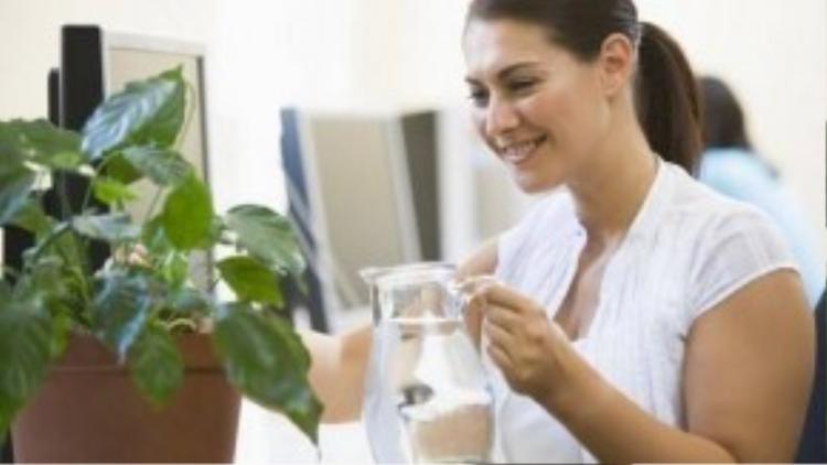 Chăm sóc cây cảnh cũng là cách giúp bạn xả stress giữa giờ làm việc.