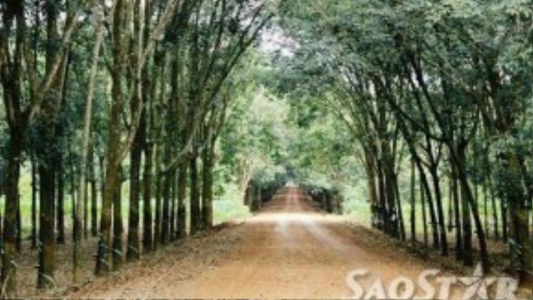 Con đường đất đỏ thẳng tắp cùng những cánh rừng cao su nối dài 2 bên đường là những cảnh quan bạn sẽ dễ dàng thấy được khi đến Bình Phước
