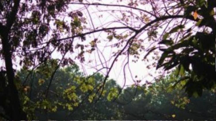 Hoàng hôn buông dần trên những ngọn cây cùng những âm thanh thiên nhiên hoang sơ sẽ tạo nên một bức tranh sinh động để lại nhiều ấn tượng trong lòng bạn.