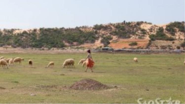 Đàn cừu trên thảo nguyên tạo một bối cảnh đẹp để tha hồ chụp ảnh.