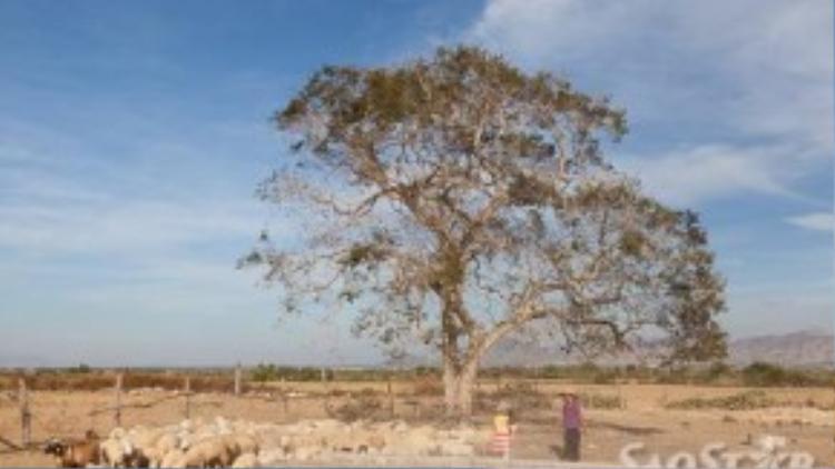 Bối cảnh đầy chất điện ảnh với một gốc cây trơ trọi giữa đồng.