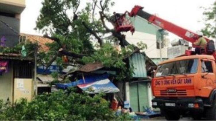 Hiện trường cây xanh ngã đè 2 căn nhà trên đường Nguyễn Thông. Ảnh: Minh Tiến.
