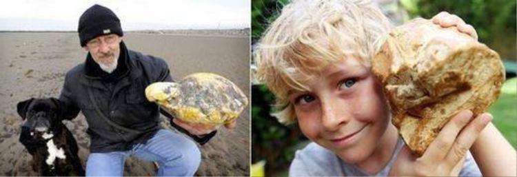 Đổi đời nhờ vô tình nhặt được bãi nôn ngàn đô của cá nhà táng