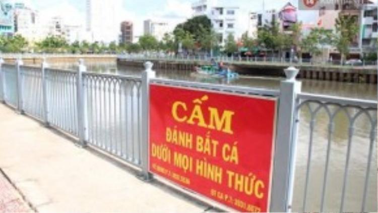 Dọn rác vẫn dọn, cấm vẫn cấm nhưng kênh Nhiêu Lộc và lượng cá ở đây đang ngày ngày rên xiết vì ô nhiễm.