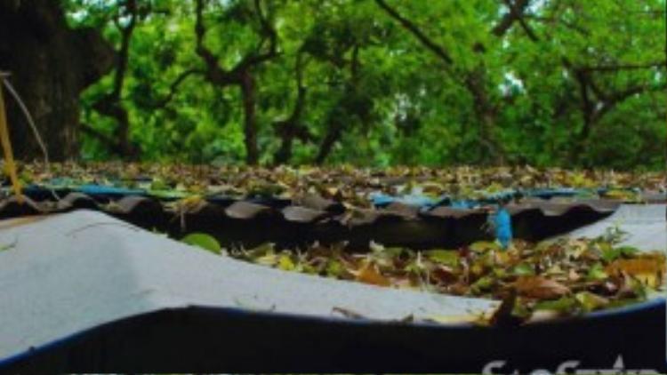 Phủ kín các mái nhà trong các khu biệt thự cũ nằm dọc các tuyến phố trồng sấu nhiều như Trần Hưng Đạo, Lý Thường Kiệt…