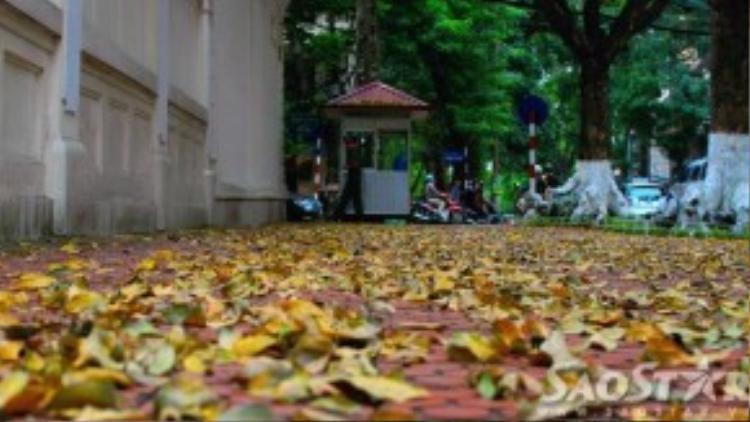 Góc đại sứ quán Pháp nằm trên phố Trần Hưng Đạo giao Bà Triệu những ngày này.