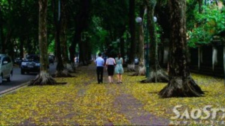 Phố Phan Đình Phùng luôn là địa điểm được nhiều người ghé thăm nhất bởi 3 hàng sấu cổ thụ lâu năm trồng dọc vỉa hè…