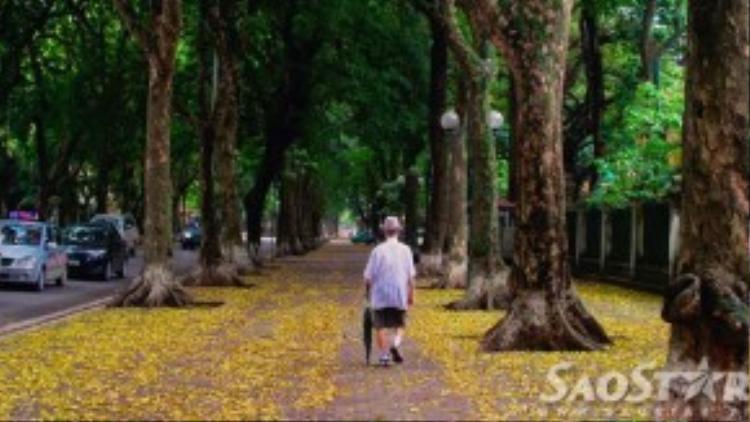 Đi qua mùa hoa người ta thường hay quên mùa lá. Để rồi một ngày người Hà Nội ngỡ ngàng khi thấy từng hàng sấu ào ạt trút lá dệt thảm vàng khắp phố phường.