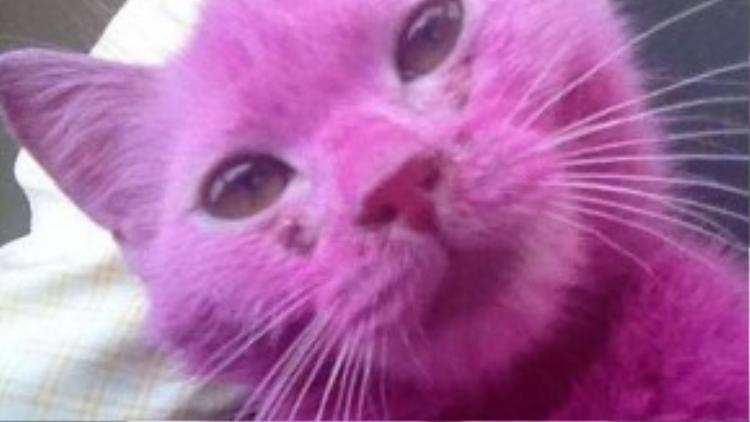 Pinky đã bị người bán nhuộm lông màu hồng để thu hút khách hàng.