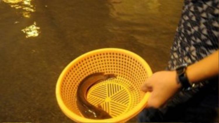 """""""Sau khi nước rút dần, các loại cá trê, rô đồng theo dòng nước chảy bơi lên mặt đường khá nhiều, chỉ cần quan sát có thể phát hiện cá ngoe nguẩy, bơi chậm phía dưới"""", thanh niên này cho hay. (Ảnh: Zing)"""