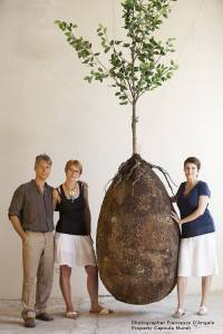 Người chết hóa thân trong cây xanh nhờ quan tài trứng