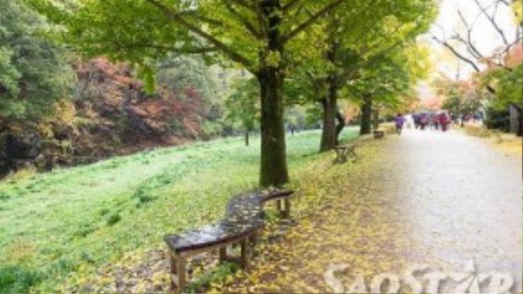 Ghế băng được đặt dọc theo đường vào chùa để khách nghỉ chân.