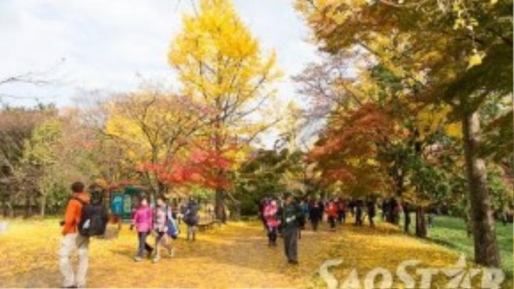 Du khách đến thăm chùa Seonunsa vào mùa thu được đón tiếp bằng một thảm lá vàng rực rỡ.