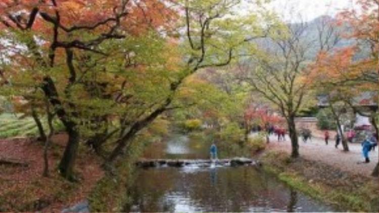 Con suối dài hàng cây số dẫn du khách đi sâu vào ngôi chùa trong núi.