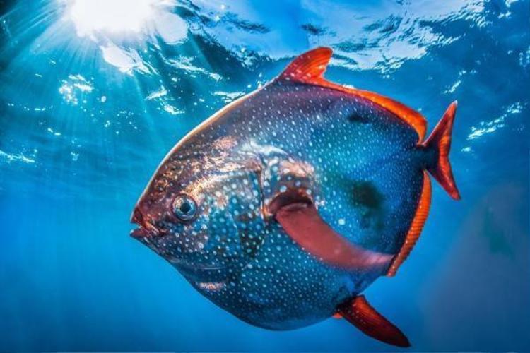Cận cảnh loài cá quái thai nhất trong các loài cá
