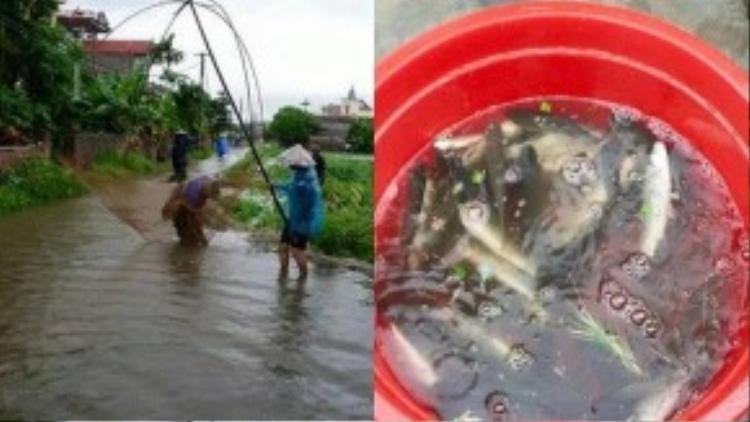 Ở Hải Dương, người dân còn dùng cả cần kéo để bắt cá. Số cá trong hình phần lớn là cá trắm. (Ảnh: Tiệp Gk)