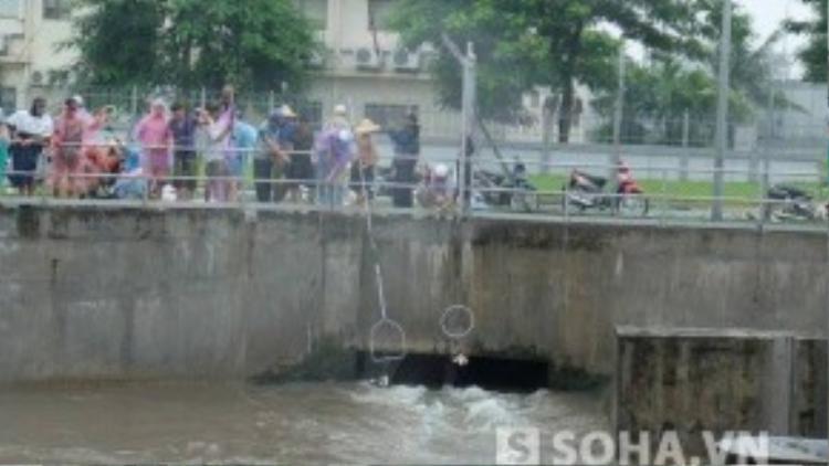 Đứng trên thành cầu dùng vợt đưa xuống cũng hớt được cá dễ dàng. (Ảnh: Soha.vn)