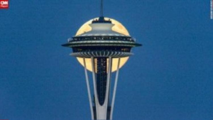 Nhiếp ảnh gia Tim Durkan đã chụp bức hình tuyệt hảo này tại Seattle in 2014.
