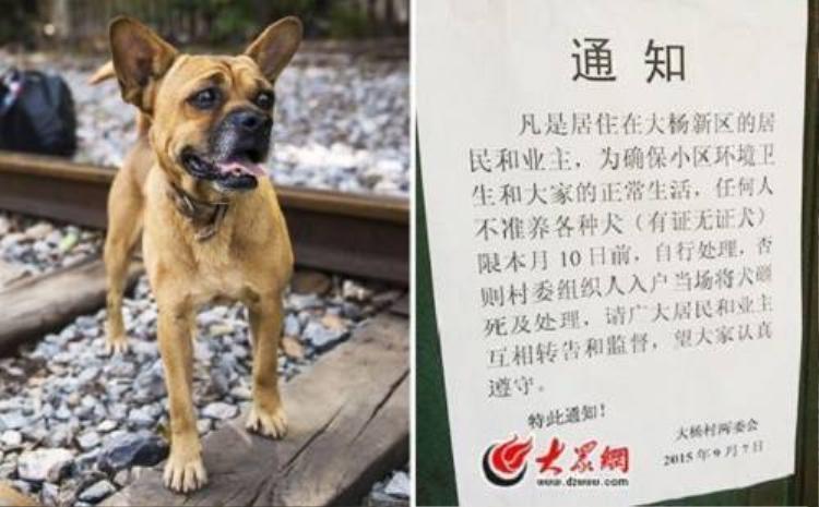 Sinh viên giải cứu đàn chó con bị bảo vệ trường chôn sống