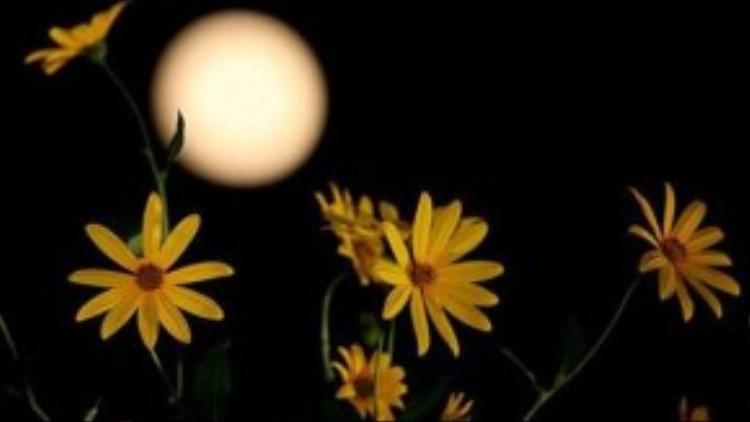 Bức ảnh chụp mặt trăng đúng vào đêm Trung thu ở tỉnh Sơn Đông, Trung Quốc.