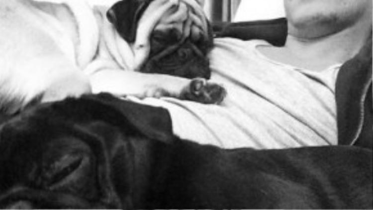 Ozil thường xuyên chơi đùa cùng những chú chó