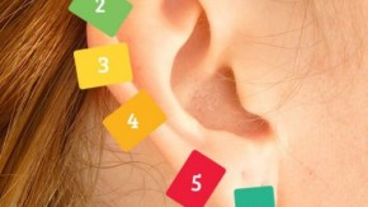 6 vị trí kết nối đến thần kinh trung ương.