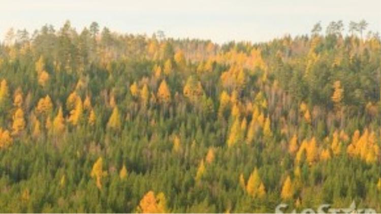 Bức tranh thiên nhiên tương phản giữa cây lá vàng và xanh.