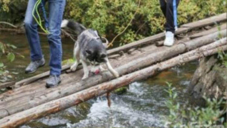 Cả những chú thú cưng cũng đượcđi cùng, trèo đèo, lội suối.
