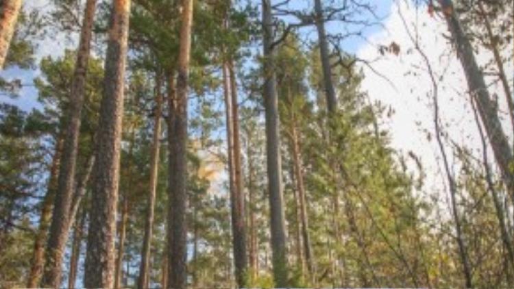 Để nhìn được bao quát toàn cảnh rừng Taiga rộng lớn bạn cần phải có sức khoẻ và ý chí vững vàng để vượt qua những con dốc cao.