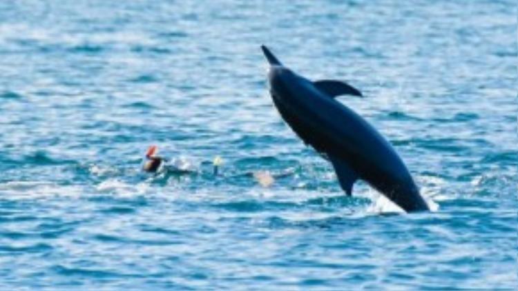 Nhiều chú cá tinh nghịch bơi đến thật sát rồi mới tung mình nhảy lên, khiến du khách giật mình thích thú.